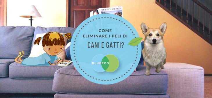 Come rimuovere i peli di cani e gatti da pavimenti, tappeti e divani