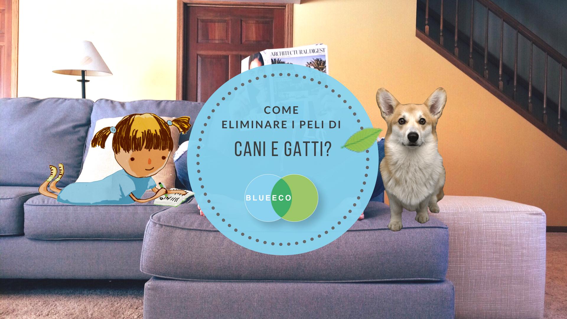 Gatti E Divani In Pelle.Come Rimuovere I Peli Di Cani E Gatti Da Pavimenti Tappeti E Divani