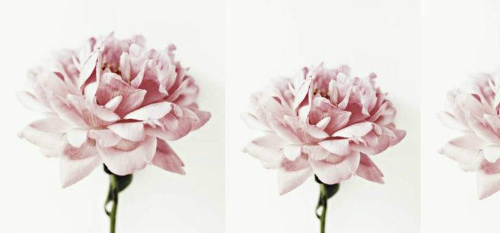 Decorare la casa con amore: le candele e i fiori più gettonati