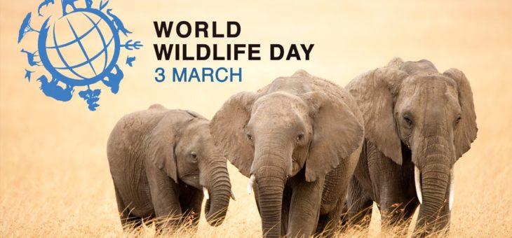 Giornata mondiale della natura: se la mia casa è ecologica anche la sua lo è